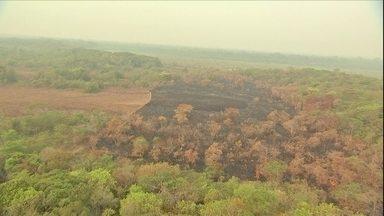 Incêndio consome mata em área do Parque Indígena do Xingu em MT - Fogo em linha de mais de 30 km de extensão devastou 210 mil hectares da reserva.