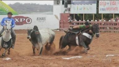 Supremo proíbe vaquejada no Ceará; prática foi considerada cruel - Para defensores, prática faz parte da cultura e da economia da região. São mais de 700 provas por ano no estado do Ceará.