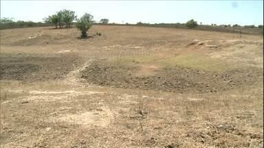 É triste a realidade de dezenas de municípios de AL por causa da seca - Muitas plantações foram perdidas e falta alimento e água para os animais.