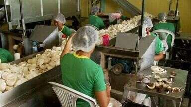Fábrica de processamento de coco é reativada em Piaçabuçu - Cooperativa foi montada para gerenciar o negócio.