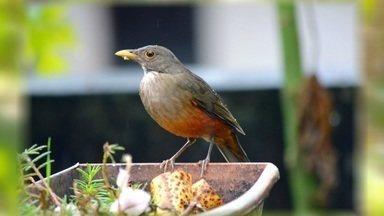 Aves no quintal de casa - Professora fotografa espécies em São Lourenço.