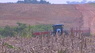 Clima chuvoso favorece o plantio de soja em Jaci-Paraná - A chegada da chuva mais cedo em Jaci-Paraná tem estimulado produtores de soja da região a intensificar os trabalhos. O plantio deve se estender até meados de dezembro.