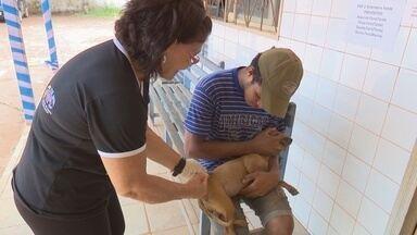 Cães e gatos são vacinados contra a raiva em Guajará-Mirim - A Campanha de Vacinação Antirrábica está sendo realizada neste sábado (22) em Guajará-Mirim (RO), a cerca de 330 quilômetros de Porto Velho, em 18 pontos de atendimentos. De acordo com o Núcleo de Vigilância Epidemiológica e Ambiental (Nuvepa), no município existem cerca de oito mil cães e gatos.