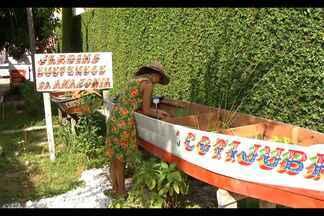 Jardim suspenso compartilha mudas no centro de Belém - Mudas podem ser levadas por moradores, que também podem deixar novas plantas no local.