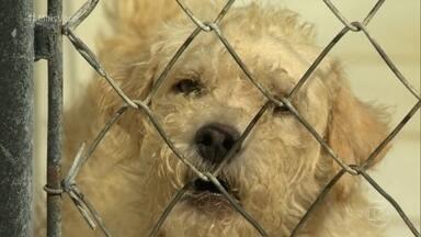 Saiba quais cuidados tomar com cachorros idosos - Animais idosos não são preferência na hora da adoção