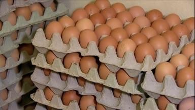 Saiba como funciona a criação de galinhas para produção de ovos orgânicos - Granja em São Paulo se especializou na criação.