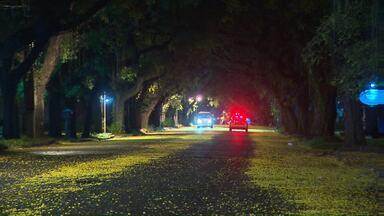 Avenida Pedro Basso é tomada pelas flores das árvores após a chuva - As flores amarelas enfeitaram o asfalto com se ladeassem um tapete negro.