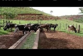 Período chuvoso no Leste de Minas gera benefícios na economia e na natureza - Chuva deve voltar à normalidade, diferente da estiagem dos últimos anos.