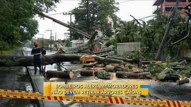 Bombeiros alertam que moradores não tirem árvores derrubadas pelo temporal na capital - Bombeiros alertam que moradores não tirem árvores derrubadas pelo temporal na capital