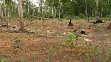 Relatório mostra municípios que mais preservaram e destruíram áreas de mata no ES - O município de Linhares foi o que mais perdeu florestas.