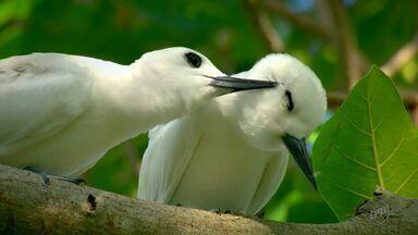 Crônica de Natal faz reflexão sobre o presente e tem aves como inspiração - Crônica de Natal faz reflexão sobre o presente e tem aves como inspiração