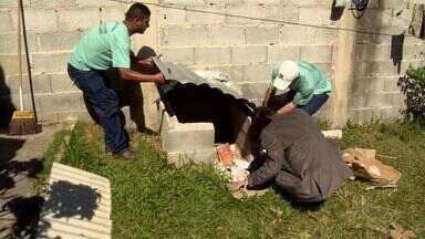 Inseto vetor da Doença de Chagas é encontrado na Serra, ES - O bicho está sendo encontrado dentro das casas.