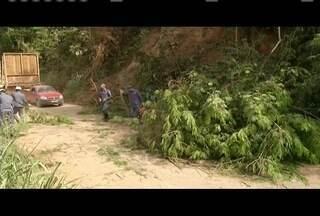 Motociclista morre após ser atingido por caminhão em Marliéria - Caminhoneiro tentou desviar de uma árvore na pista e invadiu a contramão.