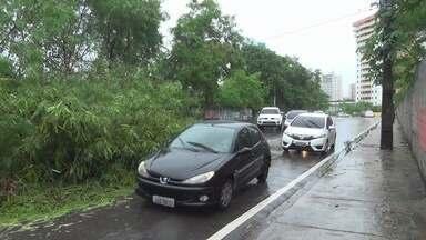 Chuva causa alagamentos, queda de árvore e deslizamentos em Manaus - Diversas árvores tombaram com a ventania