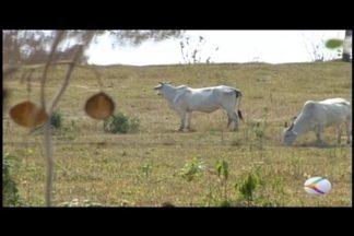 Roubos e furtos de gado em cidade do Centro-Oeste de MG gera preocupação - Produtores se reuniram com a PM em São Sebastião do Oeste. Foram discutidas ações durante o encontro.