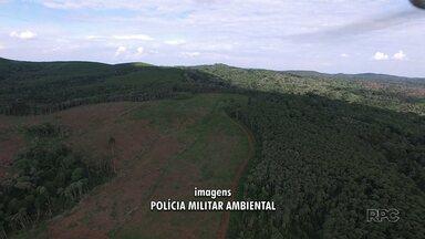 Polícia Ambiental encontra 53 hectares de mata desmatada na Serra da Esperança - O balanço da operação ainda é parcial. A operação começou no início da semana.