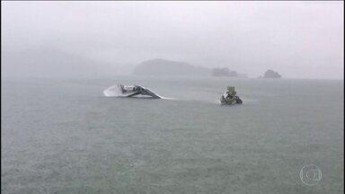Pane é uma hipótese pouco provável, dizem especialistas - Pouca visibilidade pode ter contribuído para a queda do avião. Acidente teria acontecido na segunda tentativa de pousar.