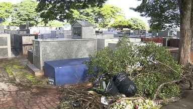Cemitério da Zona Leste passa por mutirão de limpeza neste sábado - Ação foi realizada no Cemitério Padre Anchieta.
