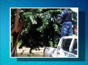 Filhote de jibóia é resgatado de árvore em centro de atendimento - Filhote de jibóia é resgatado de árvore em centro de atendimento