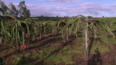 Assista ao 2º bloco do Caminhos do Campo do dia 19 de fevereiro de 2017 - Agricultores lucram com cultivo de pitaya na região noroeste e muita aventura em um Rally de ações sustentáveis em Guarapuava