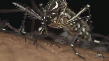 Infectologista tira dúvidas a respeito do zika vírus - Região de Campinas recebe nesse sábado (18) mutirão de combate ao Aedes aegypit, mosquito que também transmite o zika.