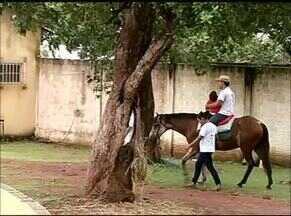 Terapia com animais auxilia no desenvolvimento de crianças com dificuldade no aprendizado - Terapia com animais auxilia no desenvolvimento de crianças com dificuldade no aprendizado