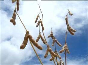 Momento do Agronegócio destaca a colheita da soja no Tocantins - Momento do Agronegócio destaca a colheita da soja no Tocantins