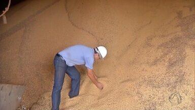 Armazéns se preparam para guardar supersafra de soja e milho em MS - Estado deve colher 7.7 milhões toneladas de soja e 8.5 milhões de toneladas de milho.