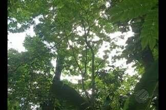 Instituto Evandro Chagas confirma a morte de um macaco por febre amarela em Belém - O animal foi encontrado no Parque Ambiental do Utinga.