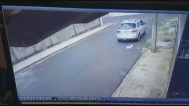 Câmera de segurança flagra mulher ao abandonar cão em Ibaté, SP - Vídeo foi divulgado nas redes sociais e revoltou moradores.