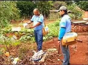 CCZ de Araguaína segue intensificando os trabalhos de combate ao aedes aegypti - CCZ de Araguaína segue intensificando os trabalhos de combate ao aedes aegypti