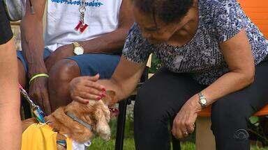 Cães visitam o Asilo Padre Cacique e fazem a alegria dos idosos - Assista ao vídeo.