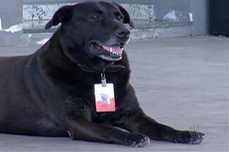"""Posto de combustíveis, em Mogi das Cruzes, adota cachorro e agrada clientes - """"Frentista"""" diferente alegra clientes do posto, em Brás Cubas"""