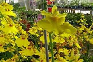 Mogi das Cruzes recebe Festival de Orquídeas - Festival é do Orquidário Oriental, do Itapeti.