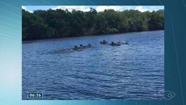 Golfinhos são vistos no canal de Maria Ortiz em Vitória - Eles seguiram pelo canal, em Vitória.