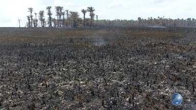 Incêndios, desperdício de água e seca são destaques na Previsão do Tempo - Saiba como fica o tempo no estado.