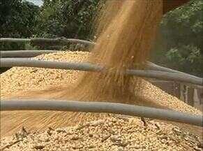 Momento do Agronegócio destaca a plantação de soja por pequenos produtores do Tocantins - Momento do Agronegócio destaca a plantação de soja por pequenos produtores do Tocantins