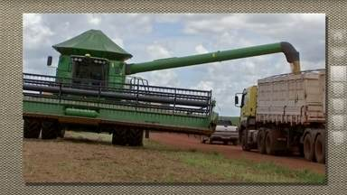 Agricultores de MT vão escoar 23 milhões de toneladas de grãos - E só de milho segunda safra só em Mato Grosso. Fora os 30 milhões de toneladas de soja que os agricultores de acabam de colher.