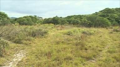 Moradores estão preocupados com ocupação de área que dá acesso a praia da Joaquina - Moradores estão preocupados com ocupação de área que dá acesso a praia da Joaquina