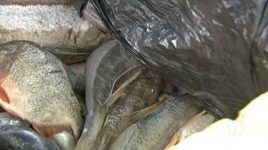Vigilância Sanitária apreende pescado impróprio na Feira do Tablado em Santarém - Apreensão aconteceu nesta terça-feira (21).