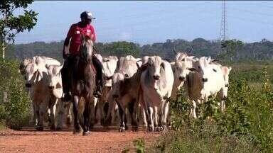 Operação 'Carne Fraca' preocupa pecuaristas no Norte do ES - Linhares é o segundo maior produtor de gado do estado.