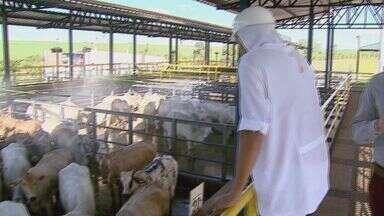 Jornal da EPTV ouve especialistas para saber procedência da carne consumida na região - Várias dúvidas surgiram desde que a Polícia Federal deflagrou a Operação Carne Fraca.