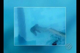 Um morador de Ananindeua foi surpreendido com a presença de uma cobra na piscina de casa - Fato aconteceu nesta quinta-feira, 23.