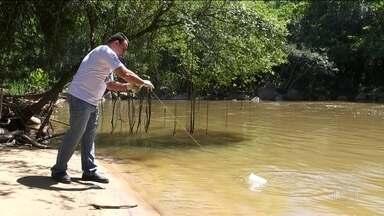 Após despoluição, Rio Jundiaí volta a ter peixes e abastece moradores - Três décadas de trabalho devolveram vida a um dos maiores afluentes do rio Tietê. A população do interior de São Paulo comemora.