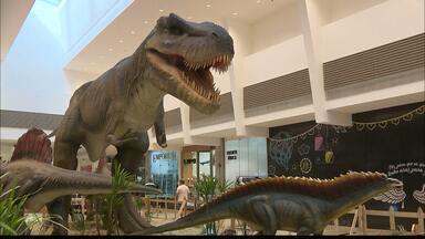 Shopping de Campina Grande traz exposição com diversos dinossauros mecânicos - Os 12 animais que parecem ter vida própria fazem parte de uma exposição que vem atraindo muitas famílias que se encantam com as réplicas.