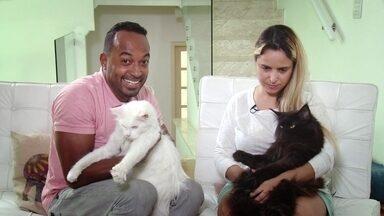 Hoje é dia de Gato: BRINQUEDOS CASEIROS - Alexandre Henderson ensina a fazer brinquedos caseiros para o seu gato.