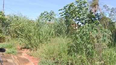 Mato alto em terreno preocupa moradores do bairro Coronel Antonino, em Campo Grande - Mato alto em terreno preocupa moradores do bairro Coronel Antonino, em Campo Grande