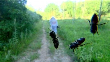 Veja como evitar problemas com as formigas, aranhas e abelhas - O passeio no parque para relaxar pode também trazer surpresas desagradáveis. É preciso tomar cuidado com as formigas, algumas aranhas e as abelhas, que são os insetos mais comuns nesse ambiente.