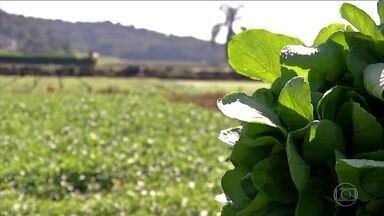 Agrião ajuda a combater tosses, gripes e resfriados - Esta época do ano é a ideal para o cultivo do agrião. E 55% do agrião consumido em São Paulo é produzido em um sítio de Biritiba Mirim, na região de Mogi das Cruzes.