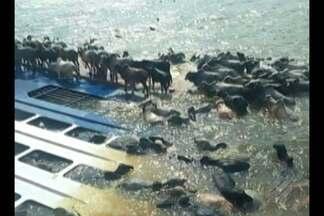 MP denuncia nove envolvidos no naufrágio do navio Haidar - Cinco pessoas e quatro empresas foram denunciadas por crimes ambientais causados em Barcarena. Navio com 5 mil bois naufragou em 2015 e contaminou região.